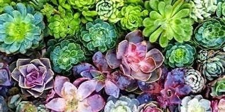 Fun with Flowers: Succulent Container Garden Workshop tickets