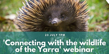 Connecting with the wildlife of the Yarra tickets