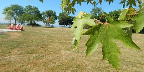 Make a Difference at Home: How Urban Trees Affect Climate Change tickets