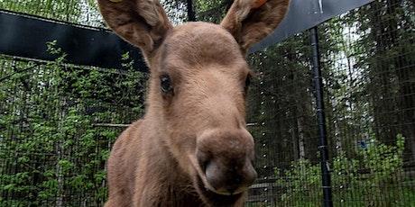 Alaska Zoo Admissions: July 12, 10:00am-8:00pm tickets