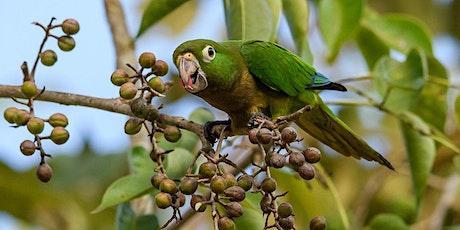 Birding in Belize and Tikal, an online presentation tickets