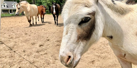 Meet and Greet with our Horses and Mini Donkey tickets