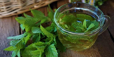July Wild Weeds Tea Party: Lemon Balm & The Sacred Path of the Bee tickets