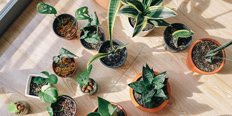 Caring for your indoor plants tickets