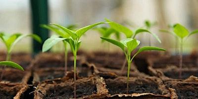 My Rainbow Garden – Grow Your Own Produce