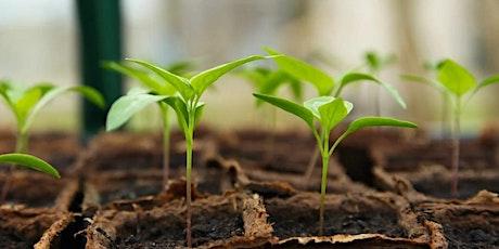 My Rainbow Garden - Grow Your Own Produce tickets