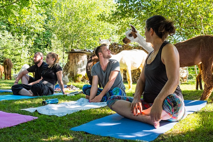 Yoga inmitten Alpakas: Bild