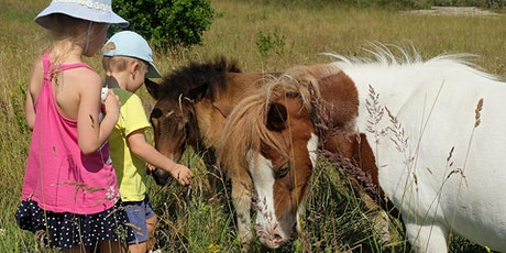 Mindful Equine Minis Half Day Camp tickets