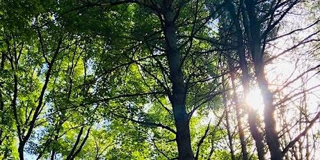 Sun Up Tree Meditation Circle tickets
