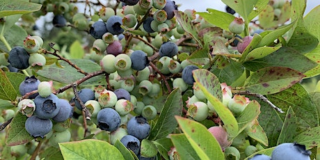 LARSEN LAKE BLUEBERRY FARM tickets