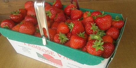 Primrose Vale's Pick Your Own Sun 12th July *LIMITED STRAWBERRIES tickets