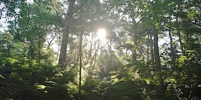 Peace in the Park -  Outside in nature, Shinrin Yo