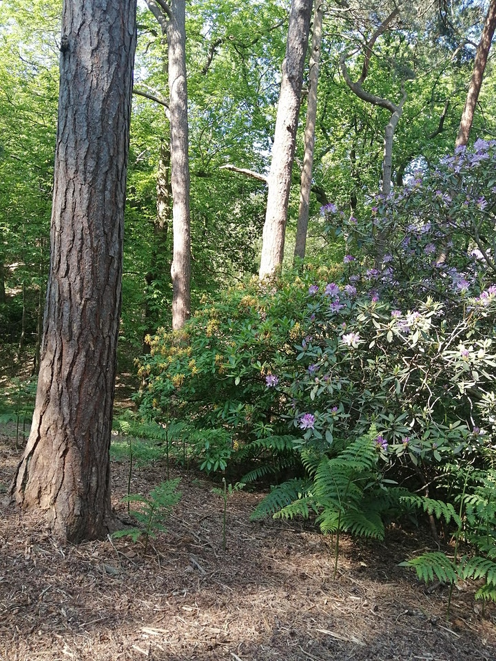 Peace in the Park -  Forest Bathing, Shinrin Yoku with Jane Innis image
