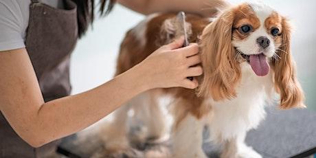 Webinar: Initiatie huid en vacht - hond tickets