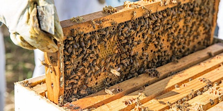 Beginning Beekeeping - A Comprehensive 2 Day Course tickets