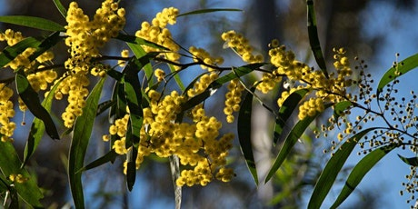 Native Plants in your Garden - Guided Walk tickets