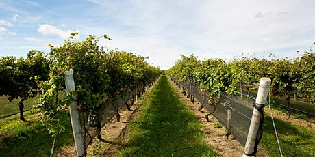 The Business of Wine webinar tickets