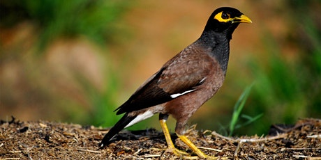 Indian Myna Trap Bookings tickets