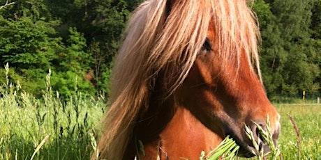 """Ponytag am Naturhof Witten– Alles rund um """"Knopf"""" und seine Kumpanen Tickets"""