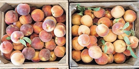 Pick Your  Own Peach Education Experience tickets