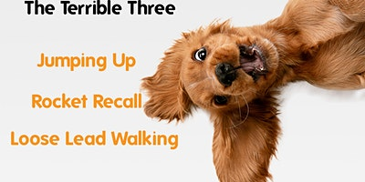 Terrible Three (Jumping Up, Recall & Leash Manners