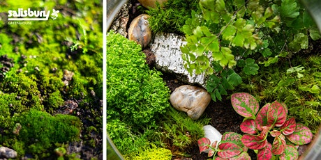 Moss Terrarium tickets