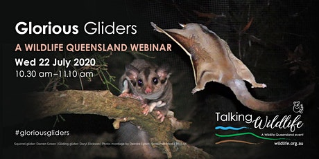 Wildlife Queensland presents: Glorious Gliders tickets