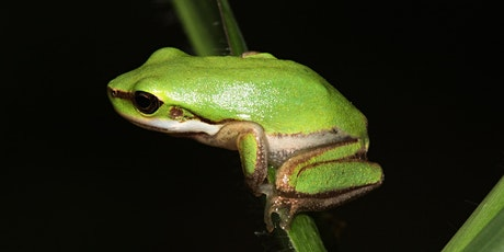 NaturallyGC Hotel for Frogs tickets