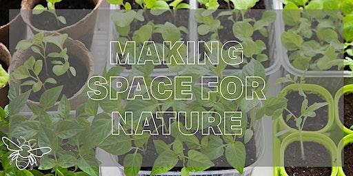 Grow a Windowsill Food Crop