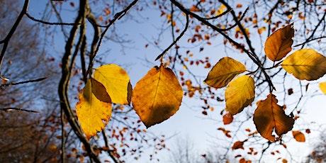 Wild Walks (Cambourne): Autumn Stroll tickets
