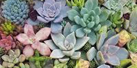 CREATIVE SUCCULENT PARTY tickets