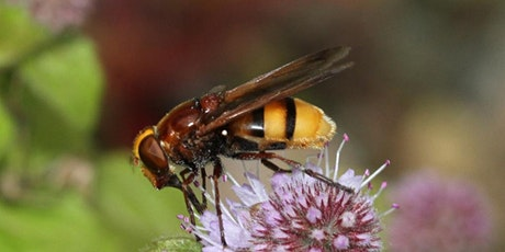 Pollinators Identification  and Field Survey Techniques tickets