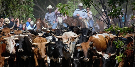 Fredericksburg Cattle Drive and Stampede tickets