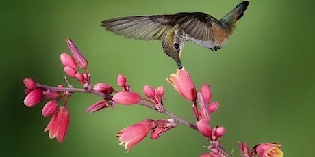 Photographing Hummingbirds with Keith Bauer Tickets