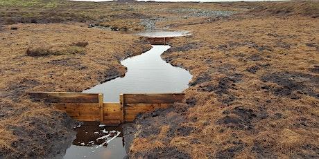 Peat Dams & Plug Planting: restoring Bowland's blanket bog tickets