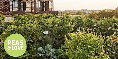 Visite et dégustation de la ferme urbaine Peas&Lo