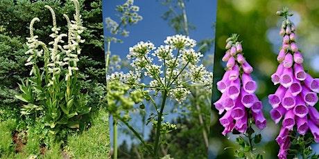 Five Poisonous Plants of Washington tickets