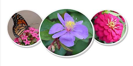 Master Gardener Plant Sale 2020 Summer tickets