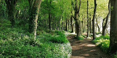 Forest Bathing In Courtmacsherry Woods tickets