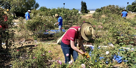 Heritage Rose Garden Volunteer Workday tickets