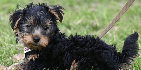 Puppy Course - 8 Weeks Outside tickets