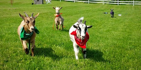 Totes Goats Yoga tickets