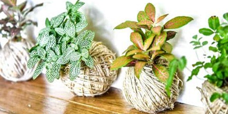 Plants'n'Pinot™ - Kokedama Class with Wine and Cheese in Kedron tickets