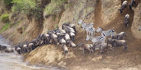 12 DAYS KENYA AND TANZANIA BUDGET HOLIDAY SAFARI tickets