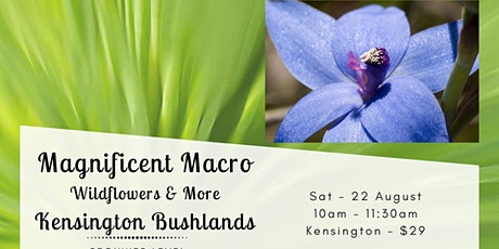 Magnificent Macro - Wildflowers and More at Kensington Bushlands tickets