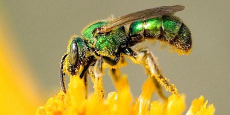 Webinar: Meeting Bee's Needs tickets