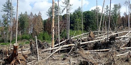 """Tag der Natur: Vortrag - """"Dem Wald in Hessen geht es schlecht"""" Tickets"""