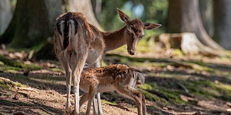 Tag der Natur: Workshop - Naturfotografie im Leitz-Park Wald Tickets