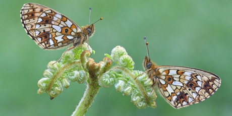 The Malvern's Lost Fritillaries Project tickets