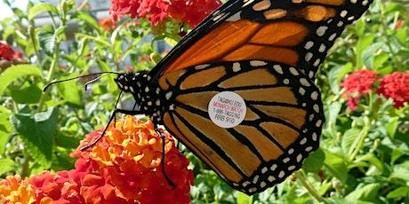 Webinar: Monarch Butterflies - Past, Present, & Future tickets